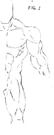 corpo 1
